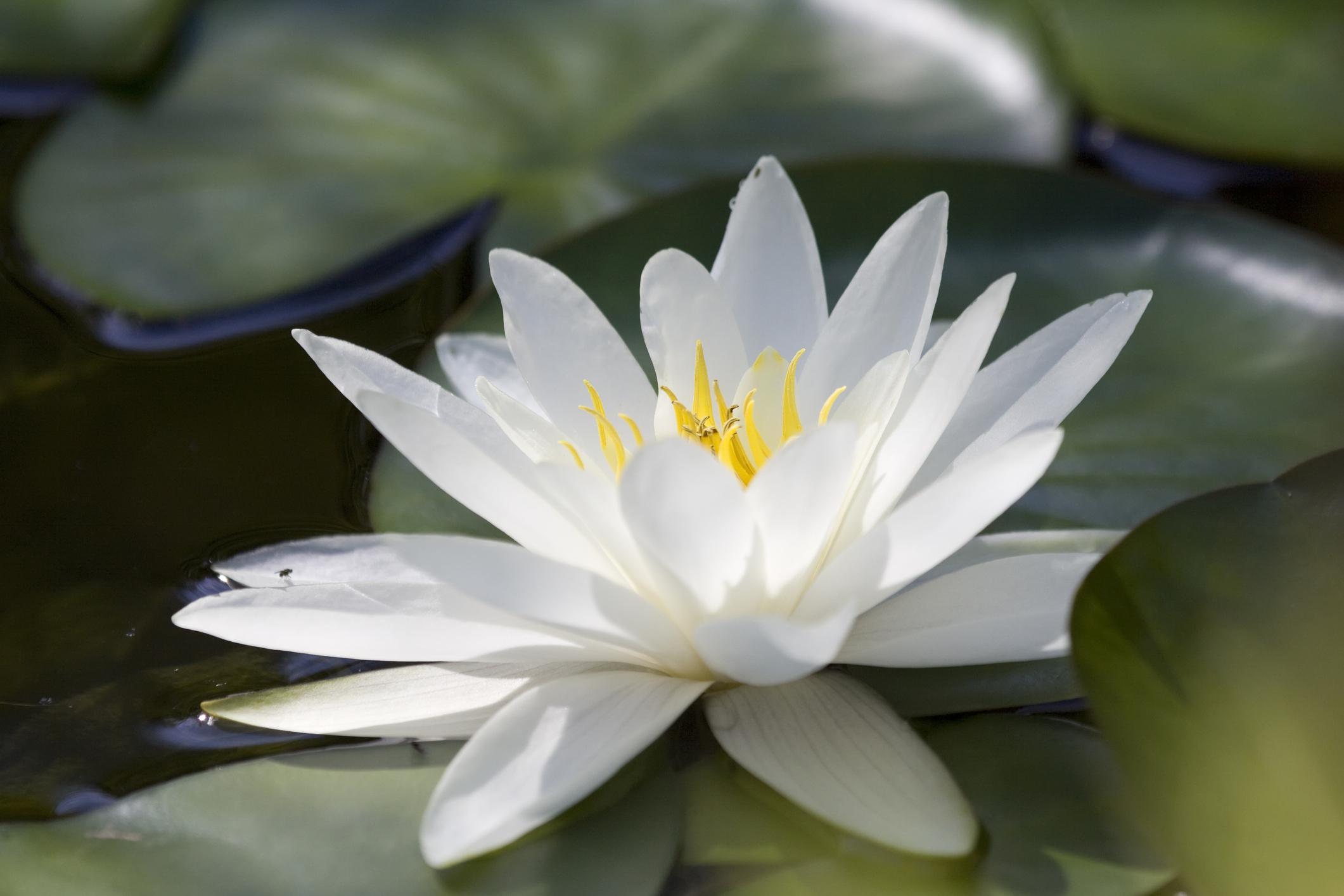 lotus-lotusjpg
