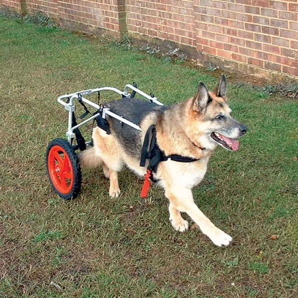 Dog Wheelchairs - Why Choose Best Friend Mobility