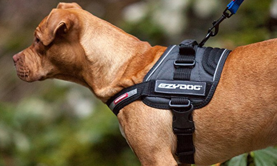 Use Mobility Harness For Dog