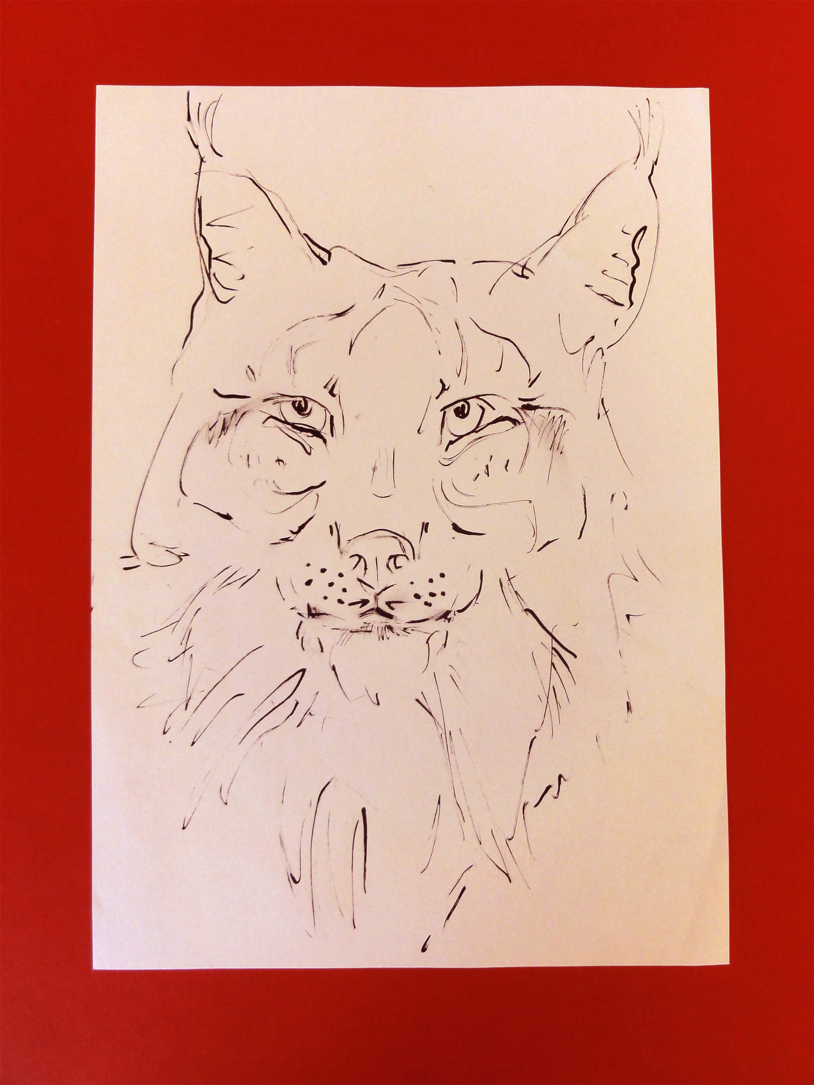 Lot No. 4: Video Oner, Untitled (lynx)