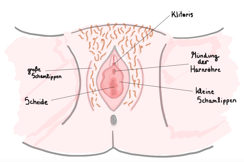 Gebärmuttermund Muttermund