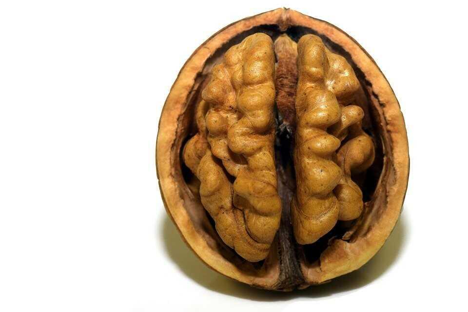Brainfood 2jpg