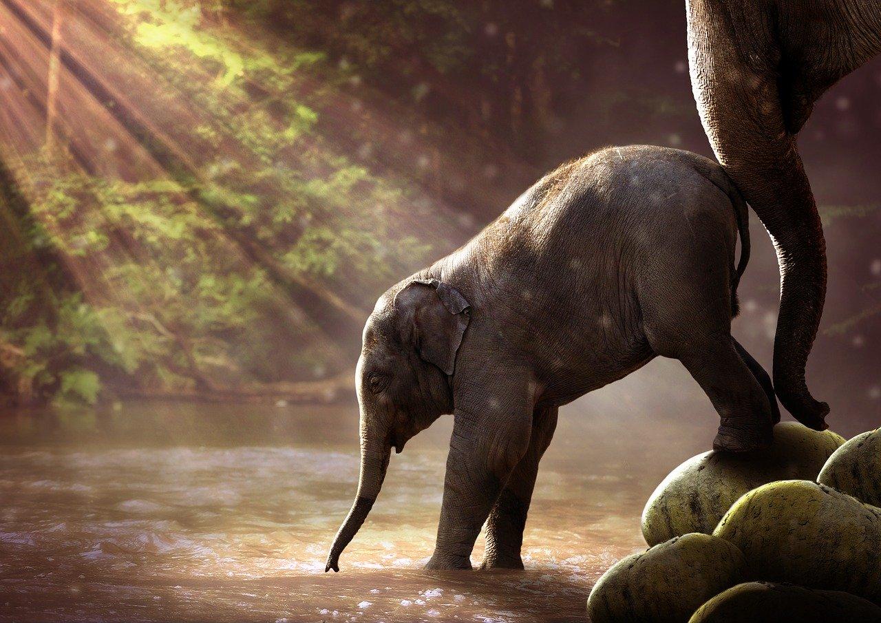 elephant-2380009_1280jpg