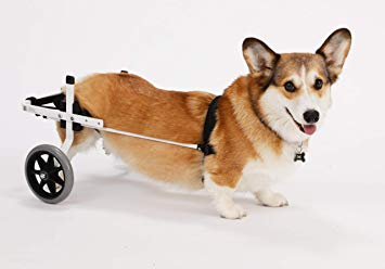 best dog wheelchairjpg