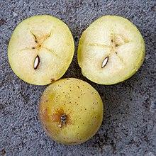 220px-2018-09-22-Sorbus_domestica_fruit-0695jpg